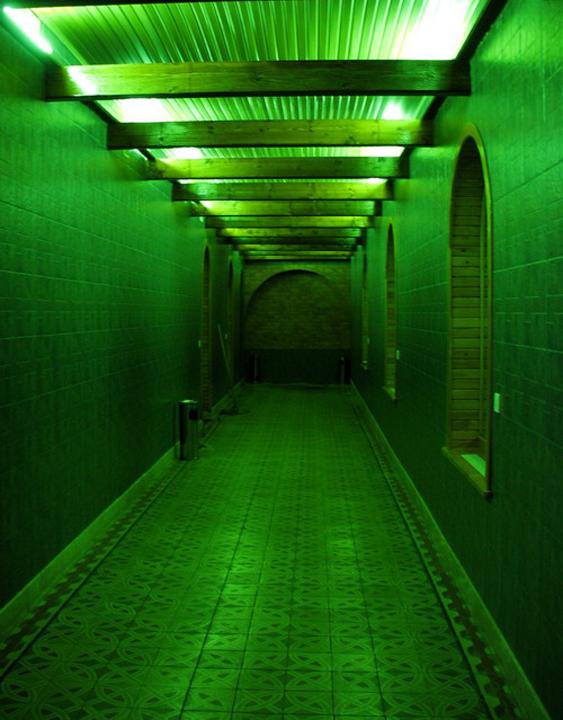 Зеленый коридор фото
